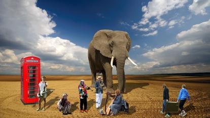 Elephants records billboard