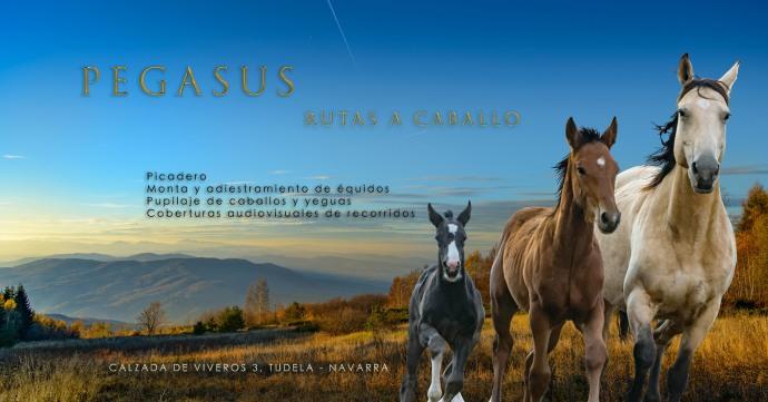 Pegasus - Billboards