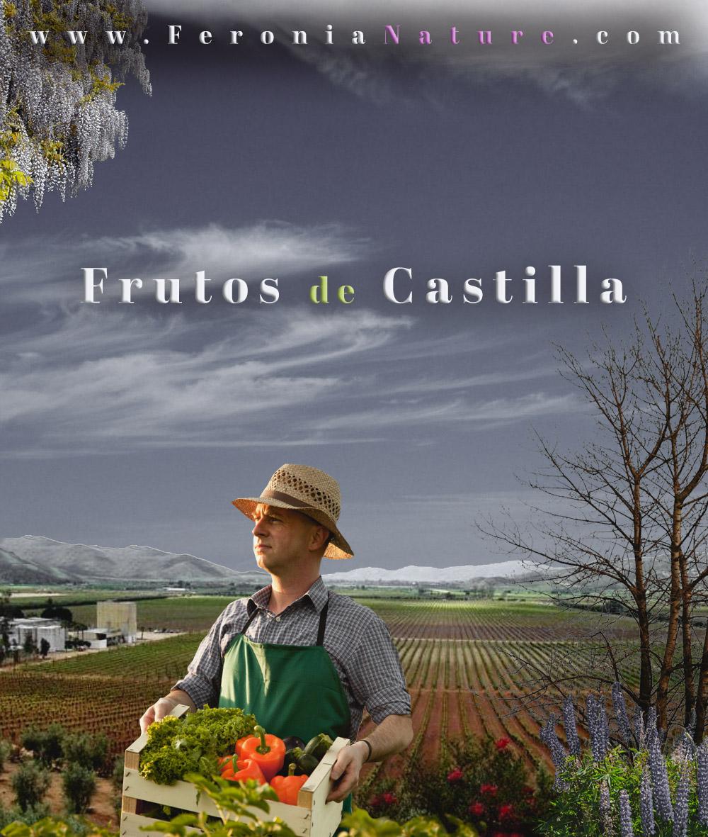 Frutos-de-Castilla-1s1aS