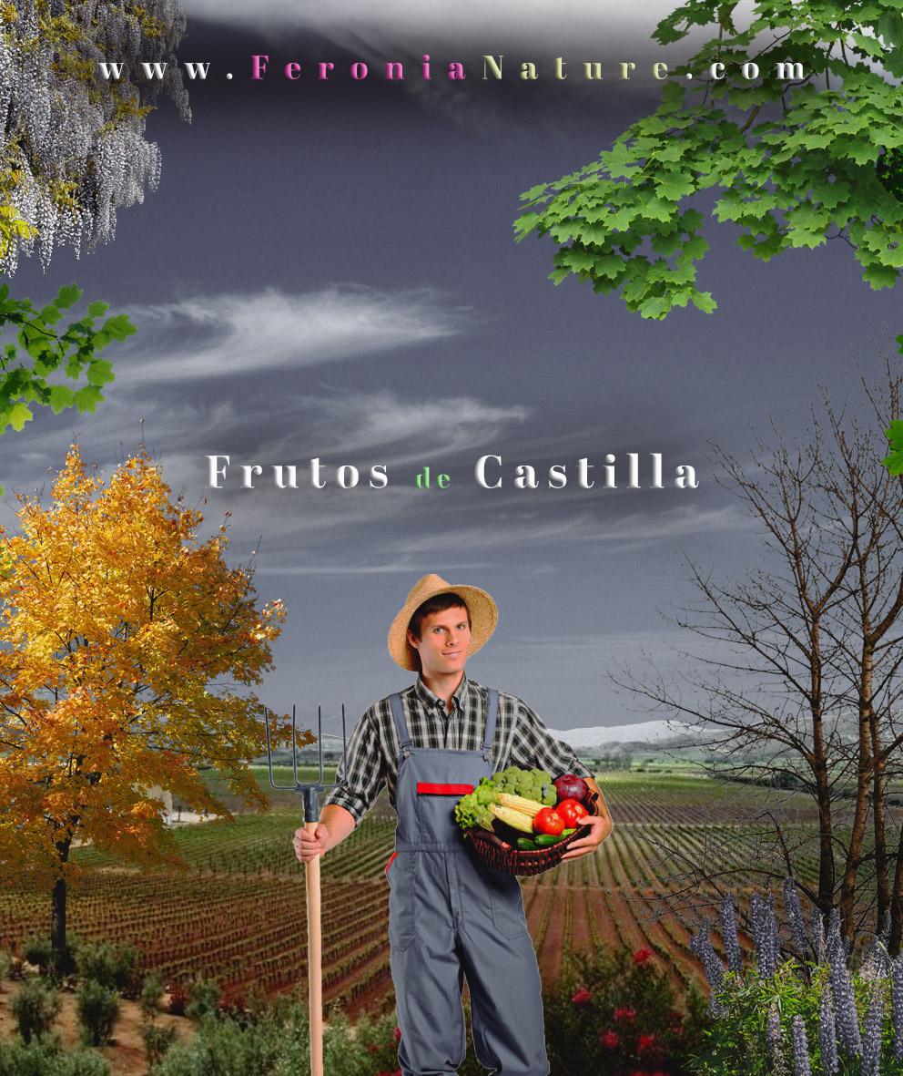 Frutos-de-Castilla-3s2b2S